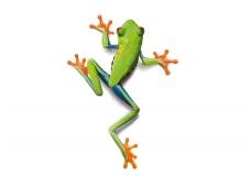 AP DIGITAL fototapetai 470032 Frog