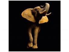 AP DIGITAL fototapetai 470033 Elephant