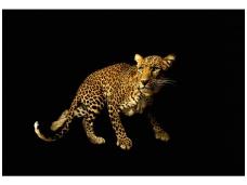 AP DIGITAL fototapetai 470036 Leopard