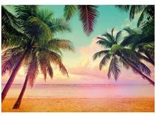 KOMAR fototapetai 8-967 Miami