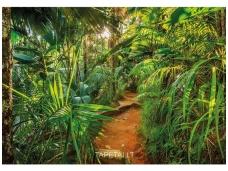 KOMAR fototapetai 8-989 Jungle Trail