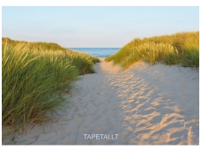 KOMAR fototapetai 8-995 Sandy Path