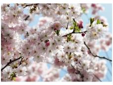 KOMAR fototapetai 8NW-507 Spring