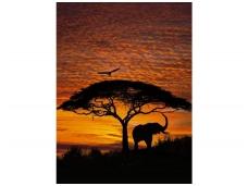 KOMAR fototapetai 4-501 African Sunset