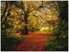 KOMAR fototapetai 8-068 Autumn Forest