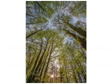 KOMAR fototapetai 4-522 Canopy