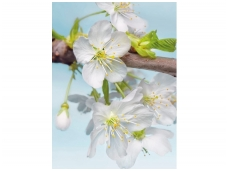 KOMAR fototapetai XXL2-033 Blossom