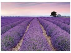 KOMAR fototapetai XXL4-036 Provence